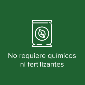No Requiere Quimicos Ni Fertilizantes